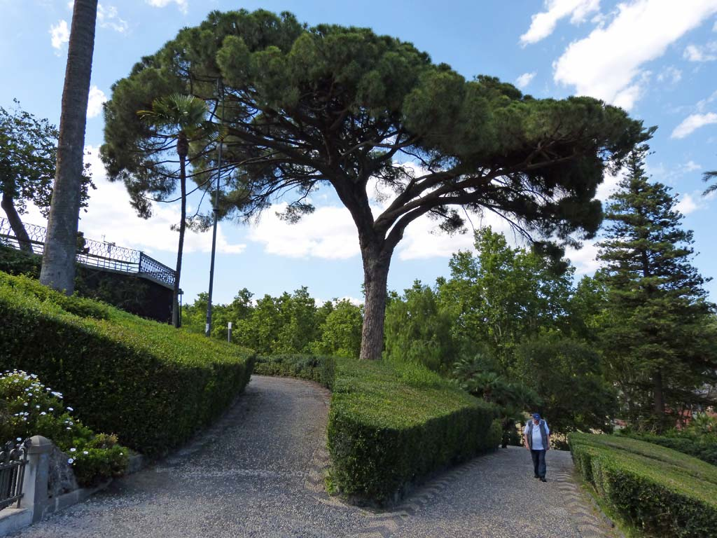 Baum Giardino Bellini
