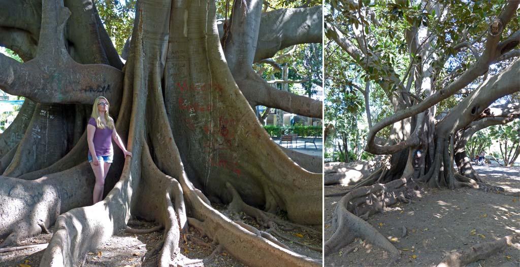 Frau Baum Wurzeln Catania