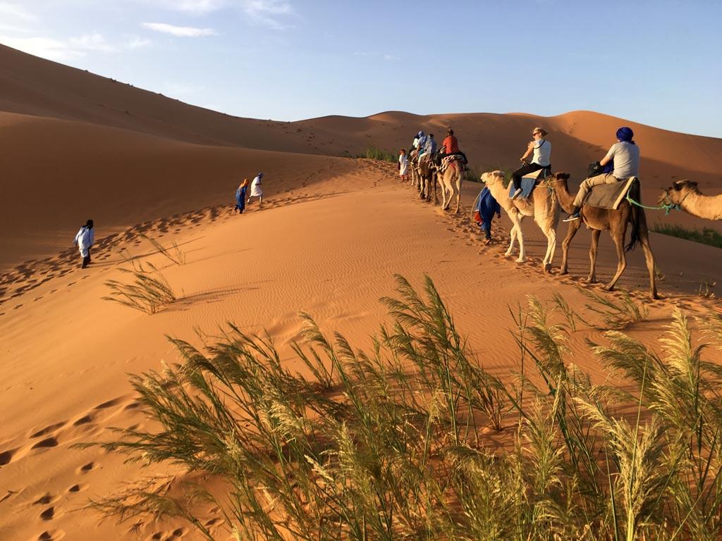 Sahara Wüste Kamele