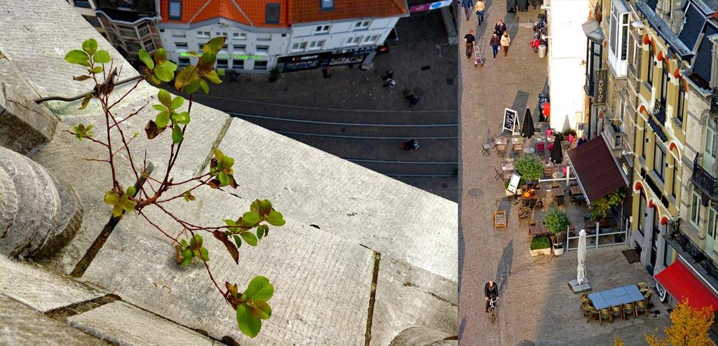 Ausblick vom Gent Belfried, Plfanze am Glockenturm und Spaziergänger in Fußgängerzone, Gent Sehenswürdigkeiten, Moments of Travel