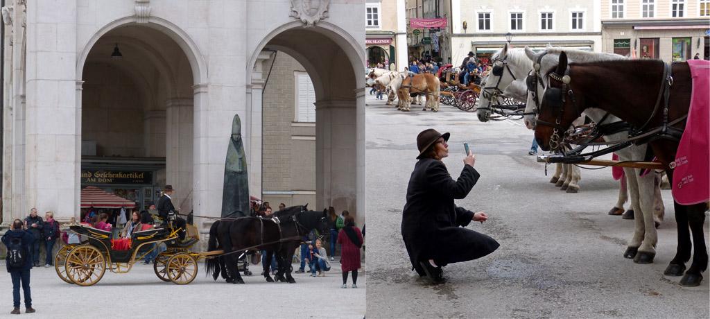 Kutsche Frau Foto Pferd