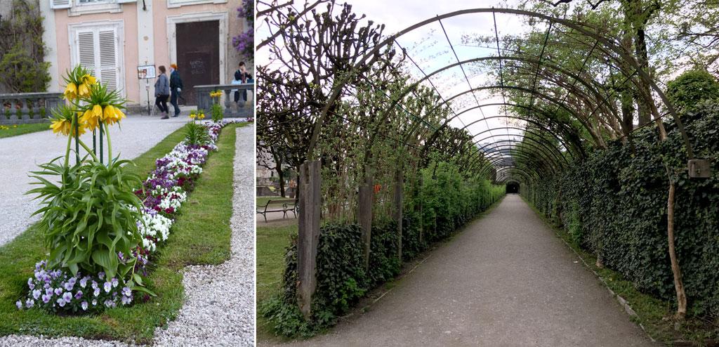Blumen Pflanzentunnel Mirabellgarten