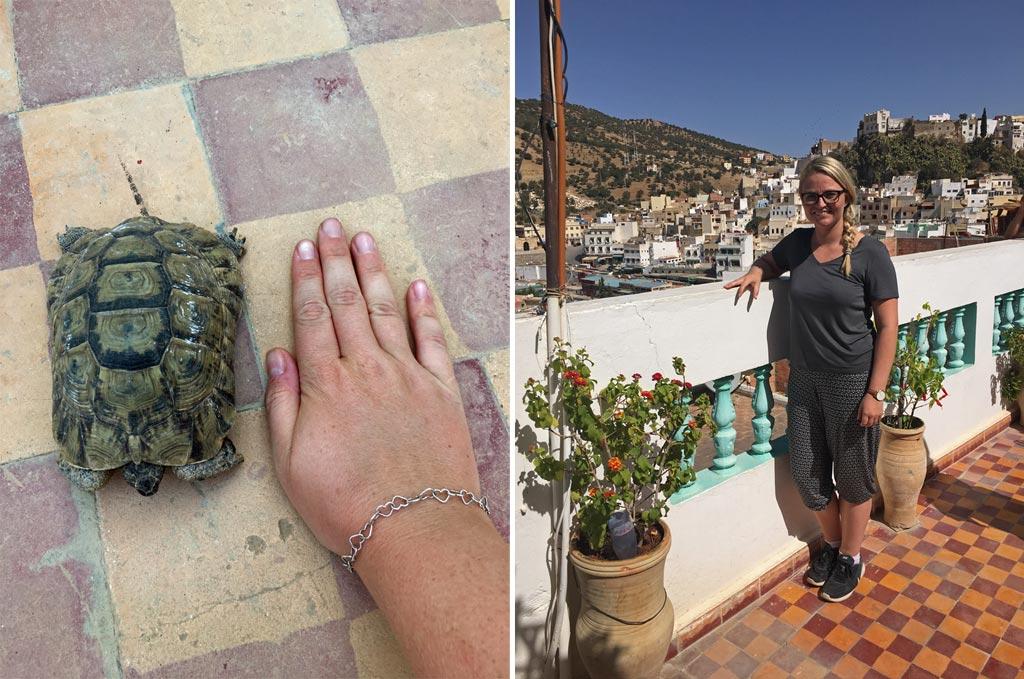 Moulay Idriss Aussicht Schildkröte