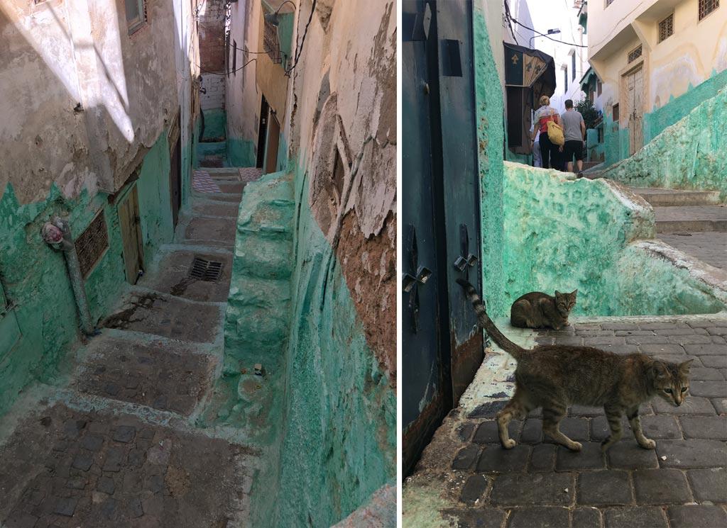 Moulay Idriss bunt Katze