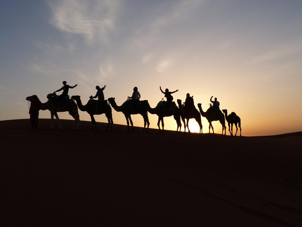 Sahara Wüste Sonnenaufgang Kamele