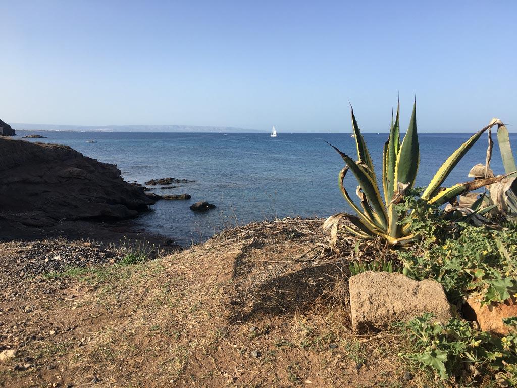 Segelboot Meer Pflanze