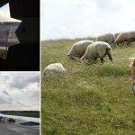 10 schlimmsten reiseerlebnisse frau wiese schafe flugzeug
